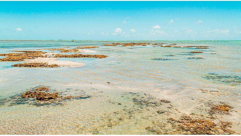 Passeios em Alagoas Maceió Praia Do Sonho Verde 3