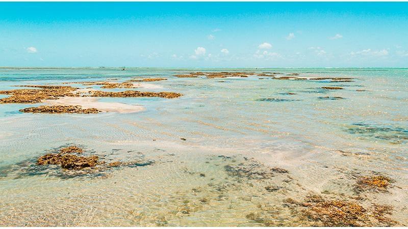passeios em alagoas maceio praia do sonho verde 3